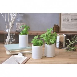 Can + Plant - White -...