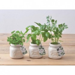 Jar Garden - Assorted 3 Styles