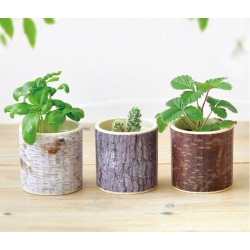 Stump Garden- assorted 3...